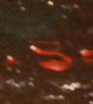 Egon Schiele - lettera S