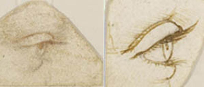 Leonardo, gli occhi specchio dell'anima