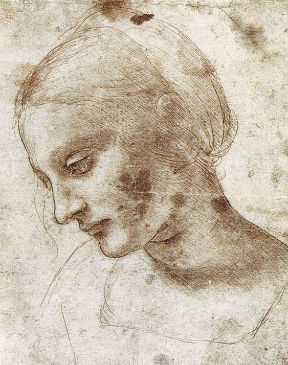 Leonard de Vinci, Studio Testa di giovane donna di profilo, disegno e terra e d'ombra su carta